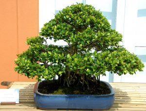 cây cảnh hợp phong thủy ở đâu đẹp