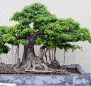 Tổng hợp mẫu cây cảnh hợp phong thủy đẹp
